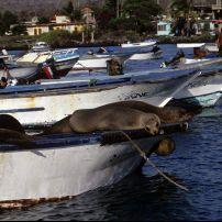 Galapagos Island, Chile
