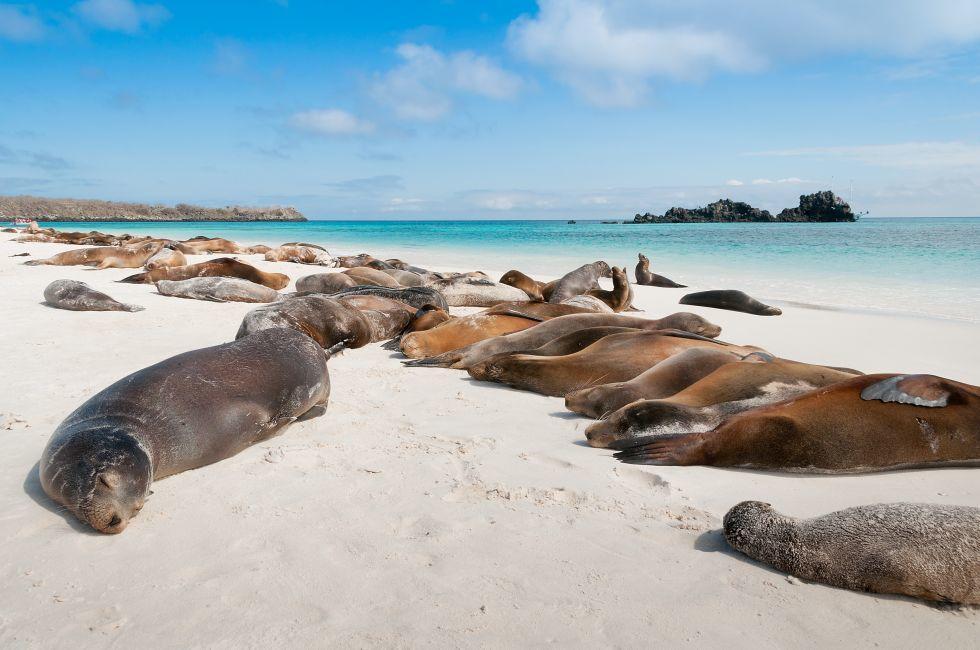 Sea Lions, Beach, Espanola Island, Galapagos, Ecuador