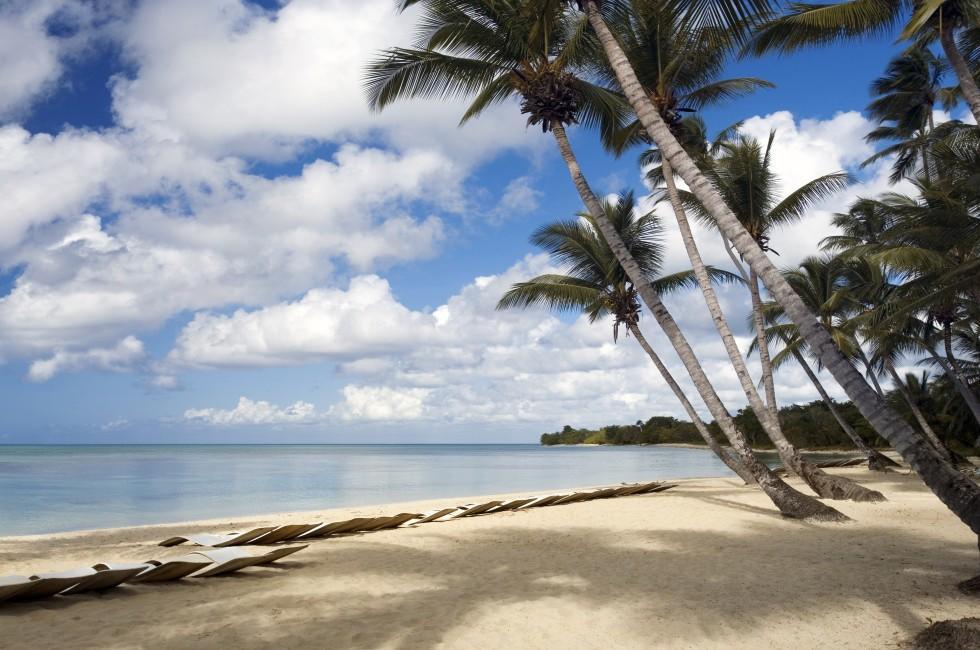 Palm Trees, Beach, Dominica, Caribbean