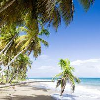 Palm Tree, Beach, Coastline, Grenada, Caribbean