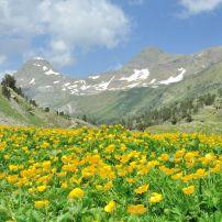 The Buttercup and Mountain Valley, Benasque Valley, Posets Maladeta National Park, Huesca, Aragon, Spain