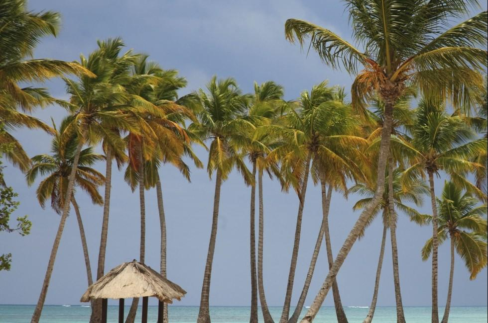 Beach, Hut, Punta Cana, Dominican Republic