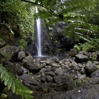 Waterfall, Rainforest, Raiatea, French Polynesia