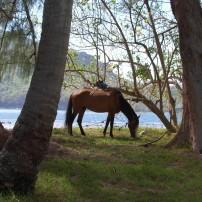 Horse, Beach, Nuku Hiva, Marquesas Islands, The Other Islands, French Polynesia