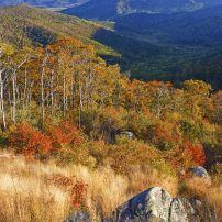 Autumn landscape in Shenandoah