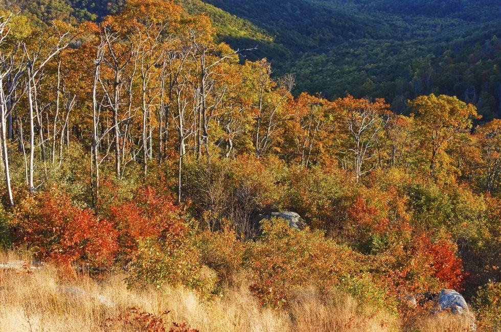 Autumn landscape in Shenandoah