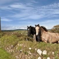 Horses, Ardmore, Waterford City, Ireland