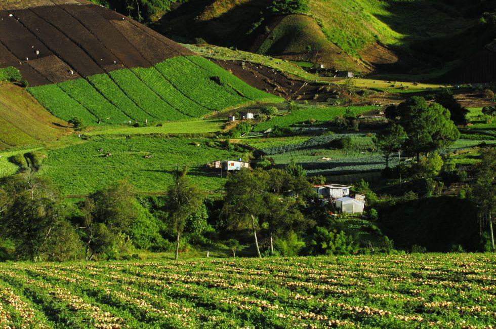 Onion Field, Cerro Punta Village, Chiriqui, Panama
