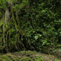 Volcan Baru National Park, Chiriqui, Panama
