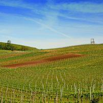 Vineyard, Kaiserstuhl, The Black Forest, Germany