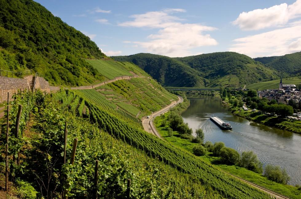 Vineyard, Mosel River, The Rhineland, Germany