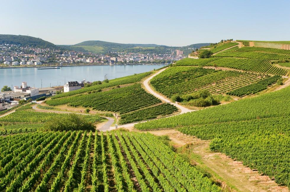 Vineyards, Rhine, Rudesheim, Germany