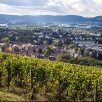 Vineyard, Cityscape, Trier, Rhineland-Palatinate, Germany