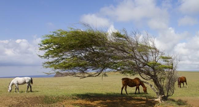 Horses, Ka Lae, Kau, South Point, Big Island, Hawaii, USA