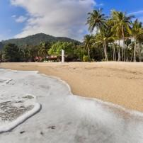 Beach, Palms, Koh Phangan Island, The Gulf Coast Beaches, Thailand