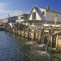 Houses, Harbor, Crisfield, Maryland