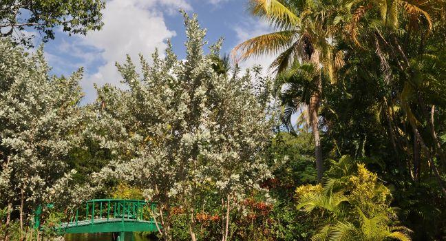 Garden of the Groves, Freeport, Bahamas