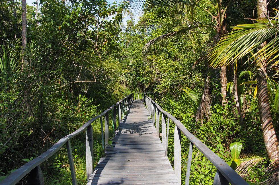 Bridge, Jungle, Cahuita, Caribbean