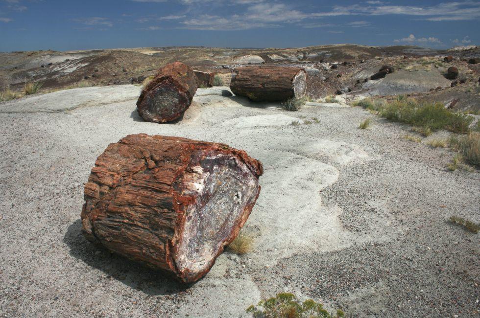 Petrified Wood, Petrified Forest National Park, Arizona, USA