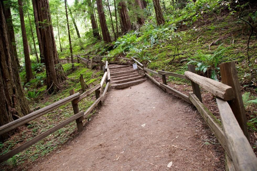 Trail, Forest, Muir Woods National Monument, California, USA