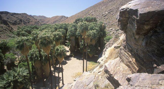 Murray Canyon, Palm Canyon, Palm Springs, California