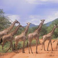 Tsavo East National Park Kenya
