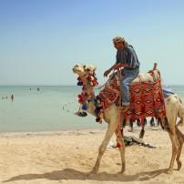Camel Trek, Red Sea Coast, Egypt