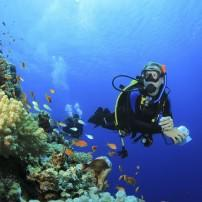 Scuba Diver, Coral Reef, Red Sea, Egypt