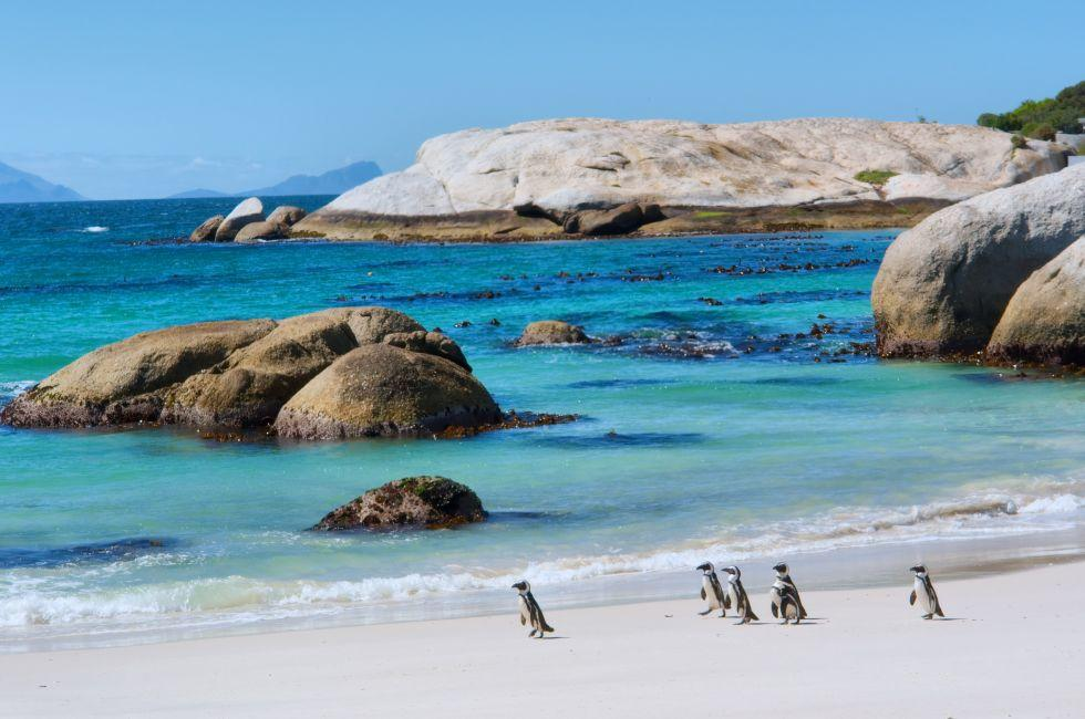 Penguins, Boulders Beach Nature Reserve, Western Cape, South Africa, Africa