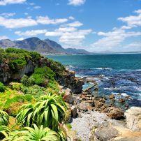 Tropical Plants, Hermanus, Walker Bay, Western Cape, South Africa