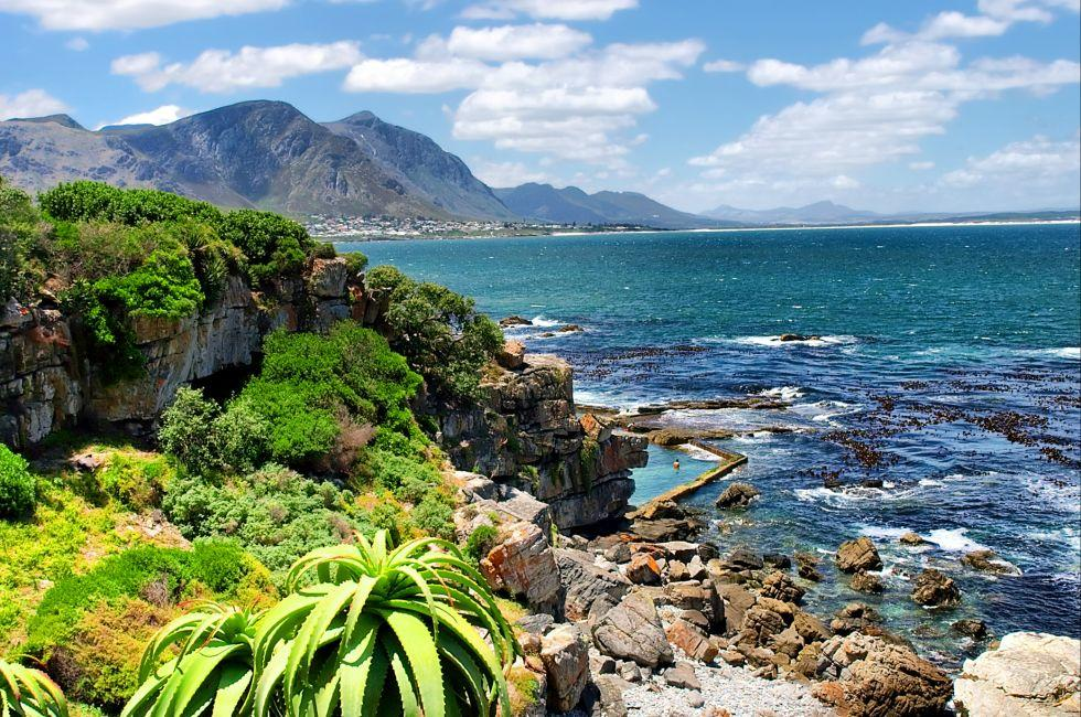 Tropical Plants, Hermanus, Walker Bay, Western Cape, South Africa