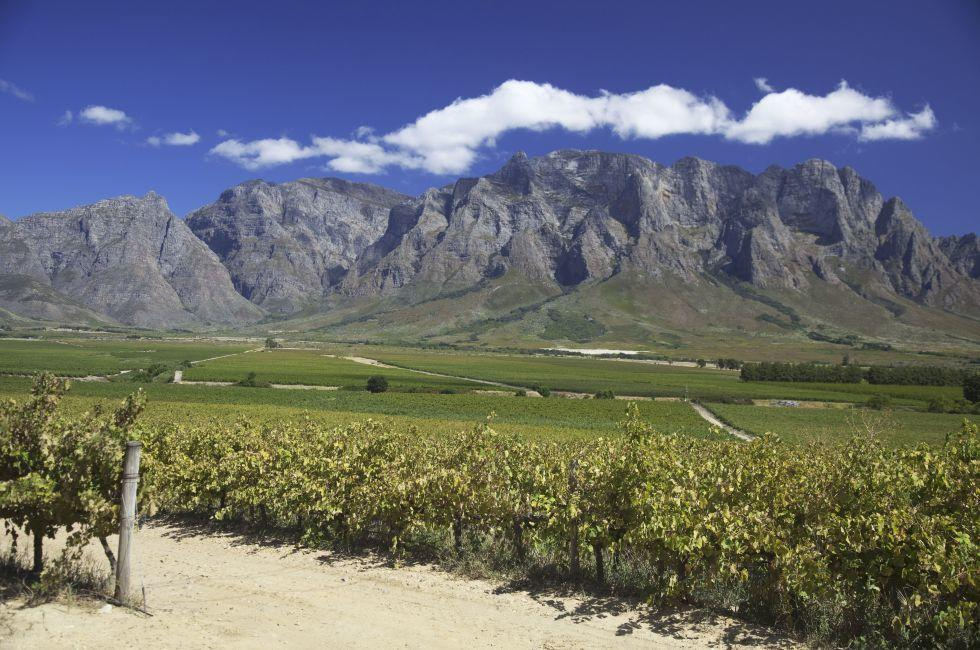 Vinyard, The Western Cape, South Africa