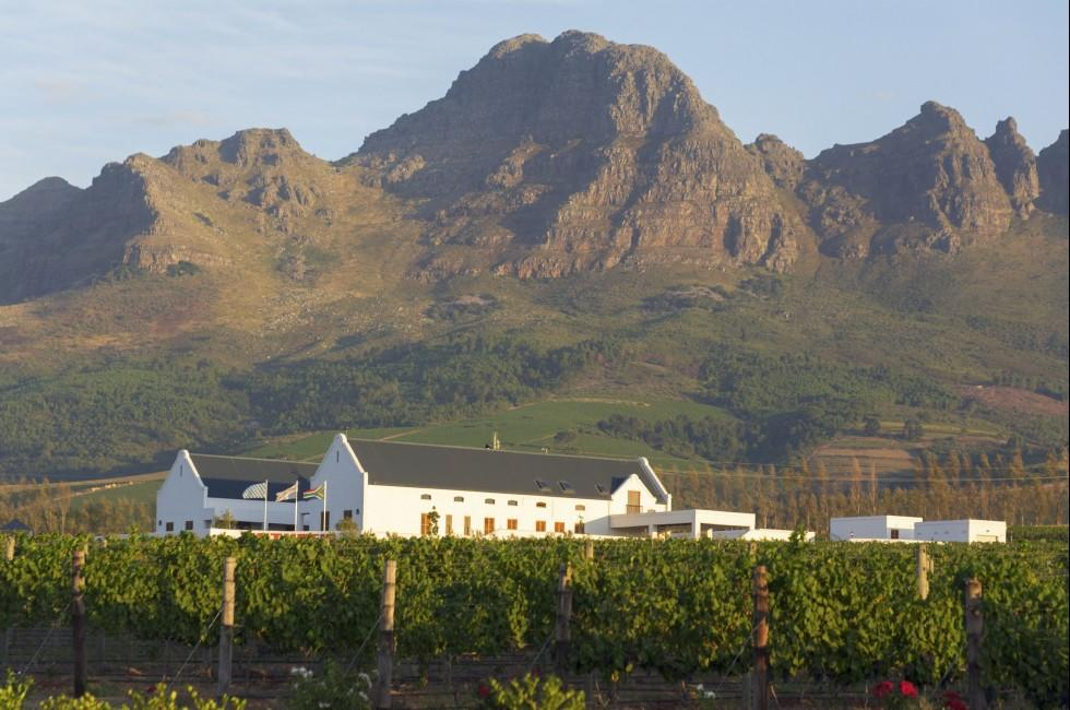 Vinyards, The Western Cape, South Africa