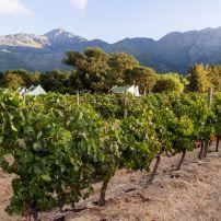 Franschhoek Winelands, Western Cape, Cape Town, South Africa
