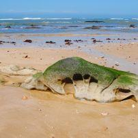 Rock, Beach, Oceana Beach and Wildlife Reserve, South Africa