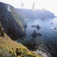 Anacapa Island, Channel Islands National Park, California