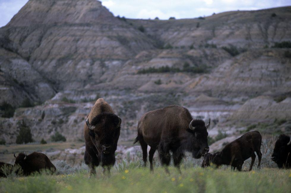 Theodore Roosevelt National Park, Medora, North Dakota, USA