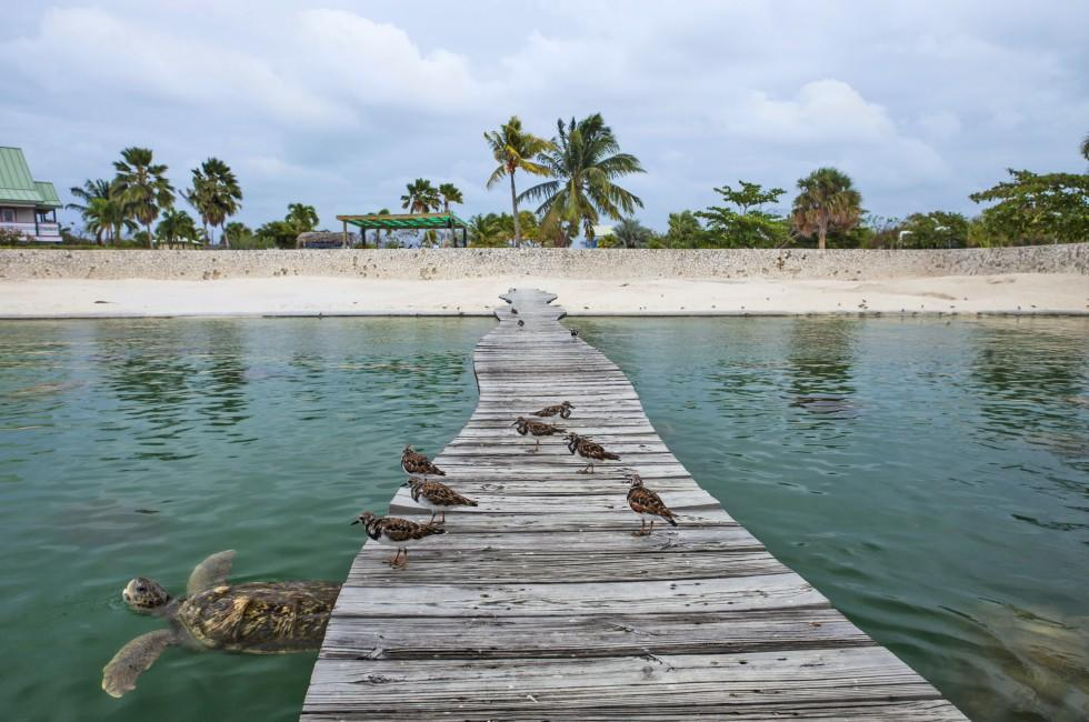 Dock, Cayman Turtle Farm, Cayman Islands, Caribbean