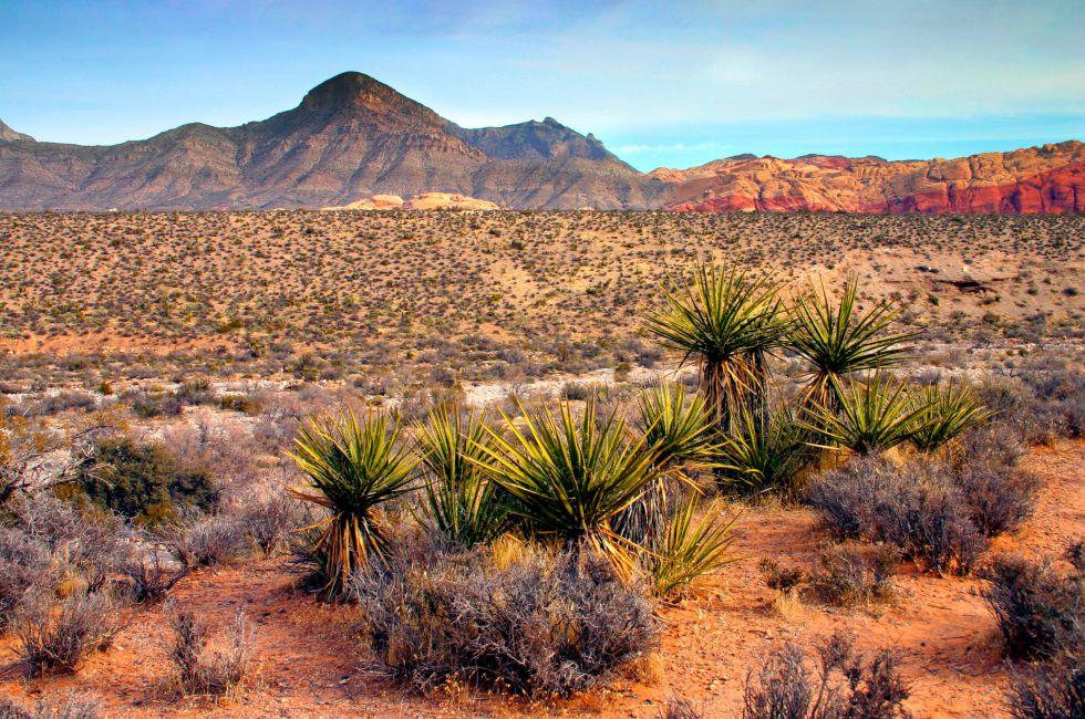 Red Rock Canyon National Conservation Area, Las Vegas, Nevada, USA