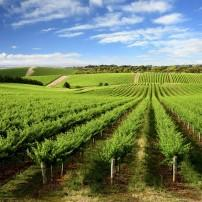 Vineyard, New South Wales, Australia