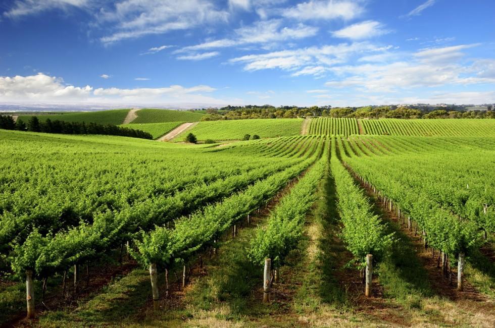 Vineyard, New South Wales, Australia