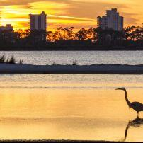 Heron, Sunset, Perdido Key, Pensacola, The Panhandle, Florida, USA