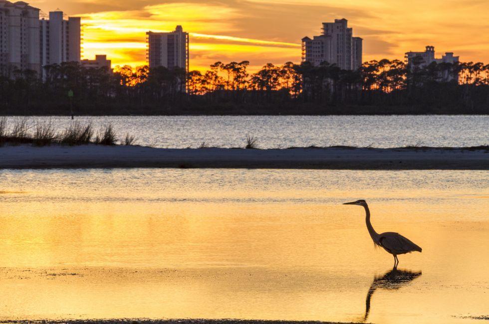 Heron, Sunset, Perdido Key, Pensacola, The Panhandle, Florida, USA