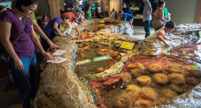 Seattle Aquarium, Downtown,  Seattle, Washington, USA