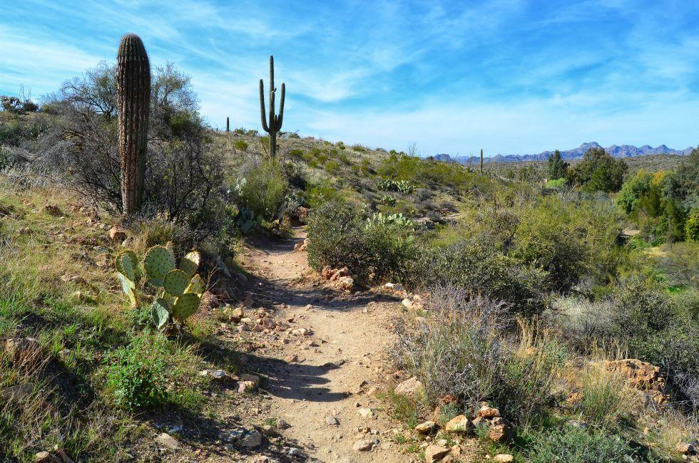 oyce Thompson Arboretum, Arizona