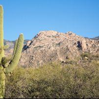 Saguaro Cactus, Saguaro National Park East, Tucscon, Arizona