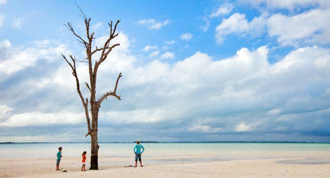 Tree, Harbour Island, Bahamas, Caribbean
