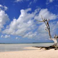 Tree, Beach, Harbor Island, Bahamas, Caribbean