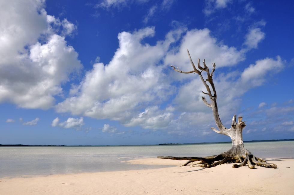 Tree, Beach, Harbor Island, Bahamas, Caribbean