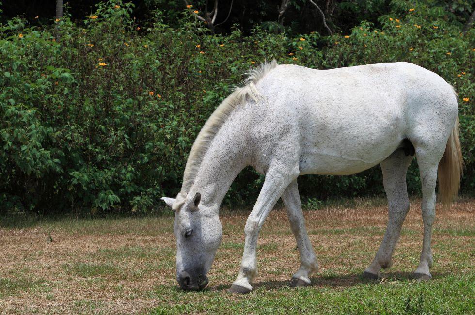 Horse, Rincon de la Vieja National Park, Costa Rica